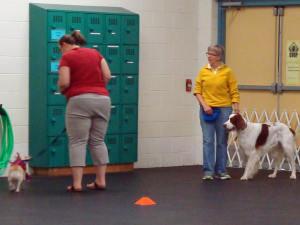 Rely races in dog training class