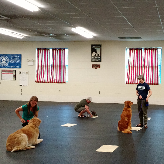 Amee Abel teaches training classes at Monadnock Humane Society